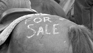 Selling a reg horse without papers?