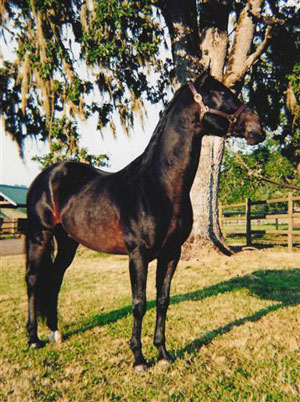 Horse of the Month August 2005