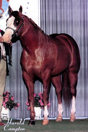 Horse of the Month February 2005