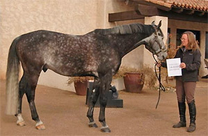Horse of the month for February 2014