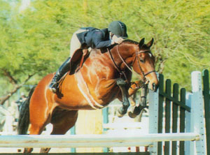 Horse of the Month January 2004