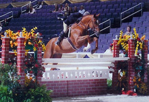 Horse of the Month January 2005