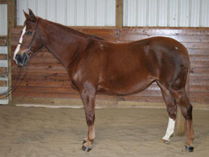 Horse of the month for January 2013