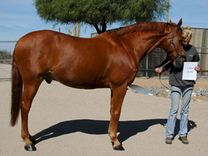 Horse of the Month for January 2015
