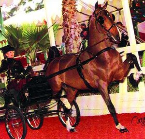 Horse of the Month June 2005