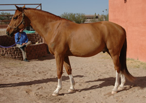 Horse of the Month March 2007