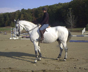 Horse of the Month for November 2003