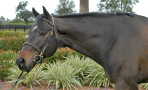 Horse of the Month for November 2013
