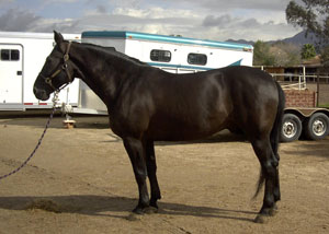 Horse of the Month for September 2003