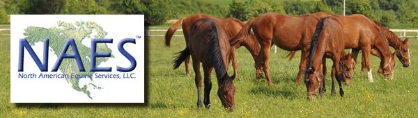 Horse Appraisal Expert, Equine Litigation Consultant